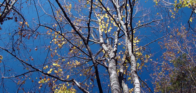 Like trees
